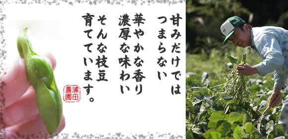 浦田農園の有機枝豆